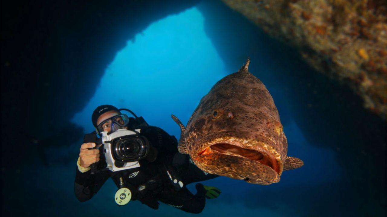 Documentário Itajara será lançado no Dia da Biodiversidade